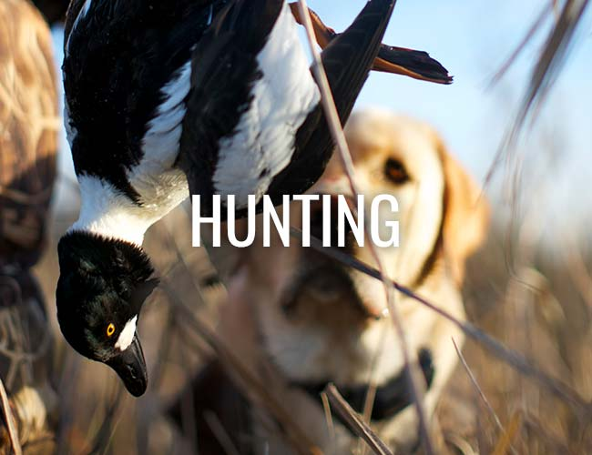 Feather Dog Outfitters Duck Hunting
