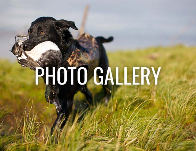 Feather Dog Outfitters Photo Galleries
